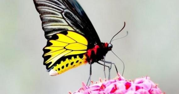 flora-i-fauna-tailanda