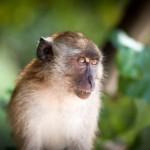 Тайские школы обезьян