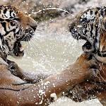 Тигровый монастырь в Тайланде